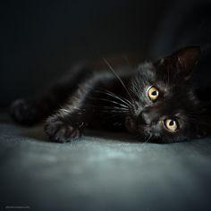 Little panther. by BeboFlickr, via Flickr