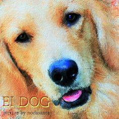 PCペイントで絵を描きました! Art picture by Seizi.N:   いのかしら動物病院のエイちゃんの絵を描きました、先生の飼っているゴールデンのエイちゃん、可愛いでしょう臆病でおとなしいワンちゃん、動物病院の看板犬です。  Bridge Over Troubled Water (Live at Pearl's)- Eva Cassidy http://youtu.be/sYyQcQSqpbI