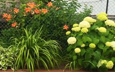 The lilies are taller than me !
