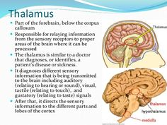 Medulla Reticular Formation Thalamus and Hippocampus Brain Anatomy, Human Anatomy And Physiology, Medical Anatomy, Psychology Notes, Psychology Studies, Study Biology, Biology Lessons, Nervous System Anatomy, Health Education