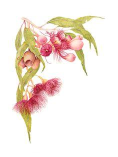 Items similar to Red Flowering Gum Botanic Fine Art Print 12 x 16 inch on Etsy - Kunst, Design, Fotografie - Australian Wildflowers, Australian Native Flowers, Australian Artists, Botanical Drawings, Botanical Prints, Art Floral, Plant Illustration, Graphic, Flower Art