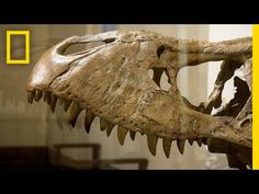 T. Rex Arrives in Washington, D.C. | National Geographic