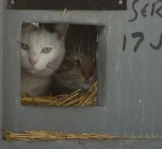 Neighborhood Cats / Feral Cat Winter Shelter   A VARIETY OF FERAL CAT SHELTERS TO BUILD