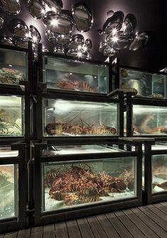 Modern Chinese Seafood Cuisine Seafood Store, Seafood Market, Restaurant Fish, Chinese Restaurant, Seafood Pasta Recipes, Seafood Platter, Market Displays, Restaurant Interior Design, Food Preparation