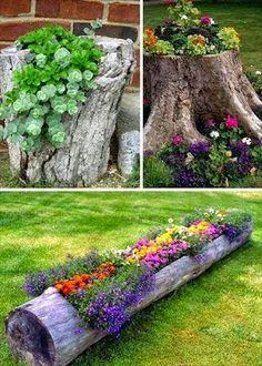Kwiaty na pniu i w drewnie