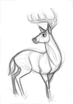 How I usually draw deer...