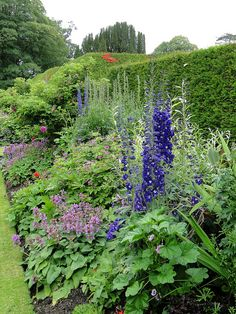 "English garden. Photo: ""Levens Hall Gardens, Cumbria"" by Sheepdog Rex on Flickr."
