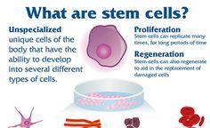 stem cells intro for IB