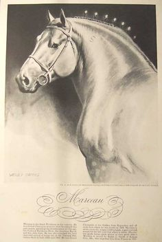 Marceau- 1941 illustration by Wesley Dennis from Esquire magazine.  One of my favorite equine artists of all time. I currently have 7 of the 12 in this series.