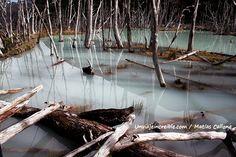 Un pantano hecho por castores en Tierra del Fuego, Argentina >> http://www.unviajeincreible.com/2013/04/14/lo-que-hicieron-los-castores-con-un-rio-color-esmeralda-en-tierra-del-fuego/