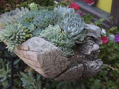 driftwood & succulents - gardening ideas & inspiration