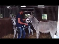 #HopeEtVanille : L'opération en Belgique - YouTube Fondation Brigitte Bardot, Goats, Horses, Belgium, Animaux, Horse, Goat