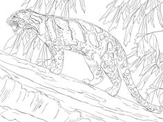 clouded leopard standing on tree coloring page