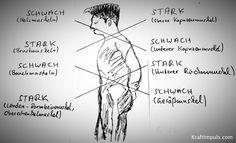 Muskuläre Dysbalance - 20 Übungen gegen Hohlkreuz, Rundrücken und Geierhals