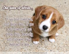 One piece of advice... If you love someone, set them free. If you hate someone, set them free. Basically set everyone free and get a dog.  #advice #basically #dog #everyone #free #hate #love #piece #quotes #set #someone  ©2016 The Gecko Said – Beautiful Quotes