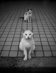 by Noriaki Maeda, via Flickr. S)
