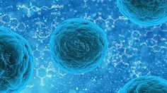 Synthetic cardiac stem cells could be foundation for 'off-the-shelf' treatments  Scientists in North Carolina and Zhengzhou, China have created a synthetic cardiac stem cell that they believe could function like a natural stem cell, but with fewer risks.