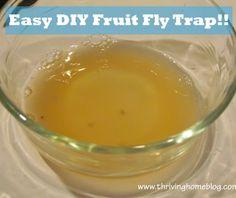 diy fruit fly trap frozen fruit