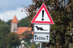 Verspielt und neugierig (c) ein Fischotter in einem Aquarell von Frank Koebsch | Verkehrsschild Otterwechsel bei Middelhagen auf Rügen (c) FRank Koebsch
