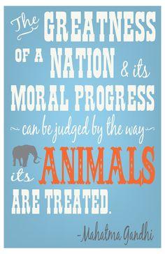 #vegan #animal rights