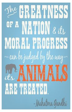 #vegan #animal rights