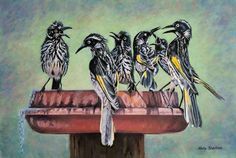 Nicky Shelton - Family Reunion - Bird - Honey Eater - Bird Bath