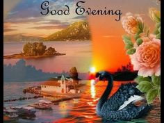 Good Evening Beautiful Sms, Massages, E-card, Quotes,  Beautiful WhatsApp video Full HD - YouTube