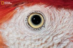 Scarlet macaw | These Extraordinary Close-Up Photos Of Animal Eyes Look Out Of This World