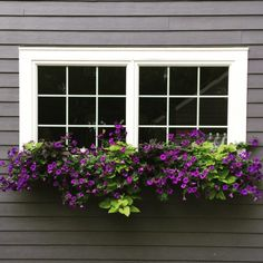 Filling my window boxes with cascading flowers is one of my absolute favorite parts about the changing of the seasons. Window Box Flowers, Balcony Flowers, Window Boxes, Cascading Flowers, Purple Flowers, Purple Petunias, Garden Windows, Window Design, Flower Pots