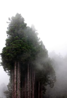 Creative Photo, Trees, Fog, Nature, and Forest image ideas & inspiration on Designspiration Beautiful World, Beautiful Places, Beautiful Pictures, All Nature, Foto Art, The Great Outdoors, Wonders Of The World, Mother Nature, Enchanted