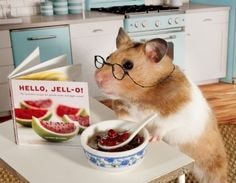PetsLady's Pick: Cute Jell-O Hamster Of The Day  ... see more at PetsLady.com ... The FUN site for Animal Lovers