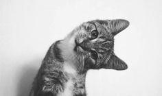 oh hello- looks like my sweet Willard as a kitten  :)