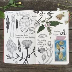 Sketching in Denmark www.anjamulder.com #sketchbook #holiday #woods #jutland #nature #botanical #moleskine #ink #grasses #nature #wildlife #haasje #hare #stones diary #notebook #sketchbook #dummy #journal www.anjamulder.com