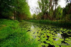 Zona protegida em Castilla y leon.Provincia de Madrid.