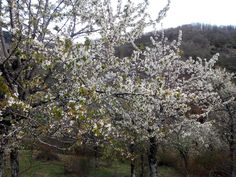 Villacorta en primavera!. León. Montaña lenesa #turismo #rural