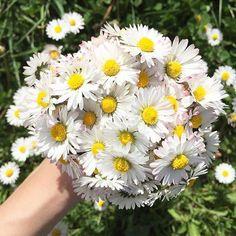 Un buongiorno esplosivo con il bouquet #huffpostitagram di @vero.nica.88 ! #margherite #daisies #whitedaisies #bouquet #daisiesaremyfavorite #flowery #flowerstagram #instaflowers #petaloso