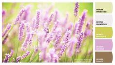 Colour inspiration {Lavender}
