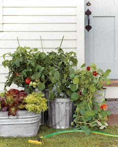 """Easy Container Gardens: Salad Garden. """"Maximize your growing space by planting varieties that are bred to be compact. Look for words like bush, baby, dwarf, tiny, midget, and patio in the plant names and descriptions. Throw in nasturtiums for color. The edible, peppery flowers and leaves are great in salads ... """" I've always wanted to try this!"""