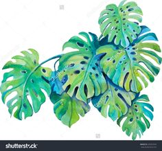 Isolated Green Leaves Of Monstera Plant In Watercolor Stock Vector ...