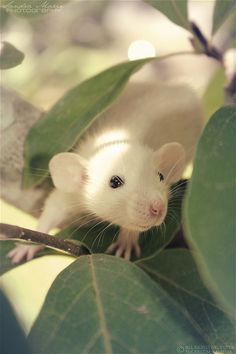 I love white w black eyes! I want one