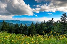 Richland Balsam view from the Blue Ridge Parkway in North Carolina --- by Scott Ramsey Photography Linear Park, Most Visited National Parks, Blue Ridge Parkway, Beautiful Places, Journey, Mountains, Country, North Carolina, Photography