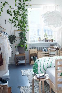 #moneyplant #pothos | pinned from lovers of mint blog