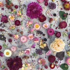 Flowers for days . . . #flower #flowers #floral #layout #photography #mixture #concrete #purple
