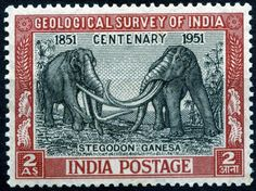 On commemoration of Indian Geological Survey centenary on 13 Jan. 1951 Indian Postage released this stamp. The stamp shows two individuals of Stegodon ganesa, the first ever reconstruction of a prehistoric animal on a stamp. Old Stamps, Rare Stamps, Vintage Stamps, Postage Stamp Collection, Vintage India, Elephant Art, Indian Elephant, Prehistoric Animals, Mail Art