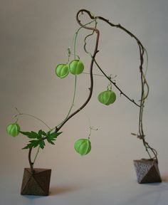 what in the heck are those green things in this beautiful ikebana?