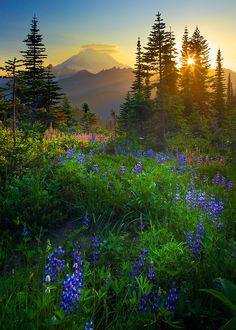Mount Rainier Sunburst by Inge Johnsson  Seattle, Washington
