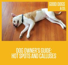 Steriods For Dogs Hot Spots