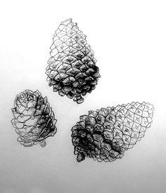 Stylization of botanic forms on Behance