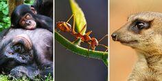 A World Animal Protection Brasil selecionou algumas das fêmeas mais fortes da natureza – que lideram bandos de até 300 indivíduos e algumas que aprenderam até a se reproduzir sozinhas