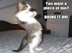 cat humor is my favorite